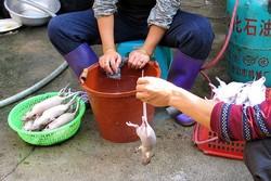 Clean your rat