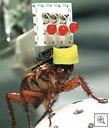Cockroachrobobrain